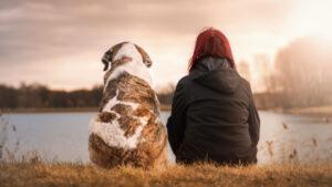 Bindung zum Hund stärken Bindungsübungen