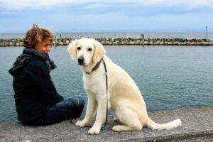 Hundesprache verstehen Kommunikation Hund Hunde verstehen was will mir mein Hund sagen