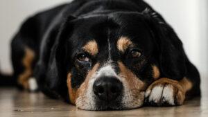 Hund hat Durchfall Besserung ohne Kohletabletten Hund