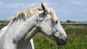 Pferd hat Schmerzen erkennen beim Pferd